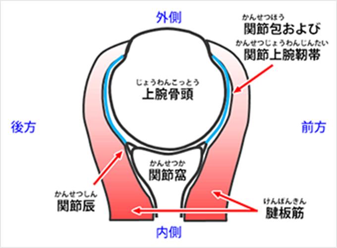 図2d.断面図(下から見たところ)